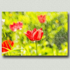 פרחים וצמחים